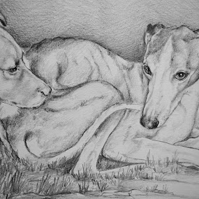 dogs  by David Van der Smissen - Drawing All Drawing ( kunst, tekening, aart, david van der smissen, belgium, artist, dog, ninove )
