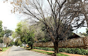 An elder tree killed by the polyphagous shot hole borer beetle - one of five dead trees in a street in Johannesburg.
