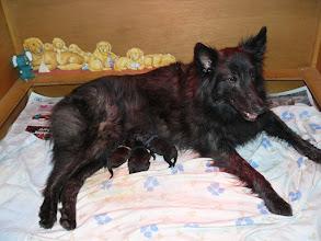 Photo: De pups van Phaedra, geboren op 6 maart 2015