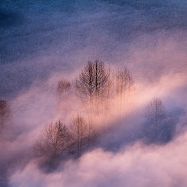 Trees in the mist by Pietro Ebner - Nature Up Close Trees & Bushes ( foggy, tree, fog, trees, morning, mist,  )