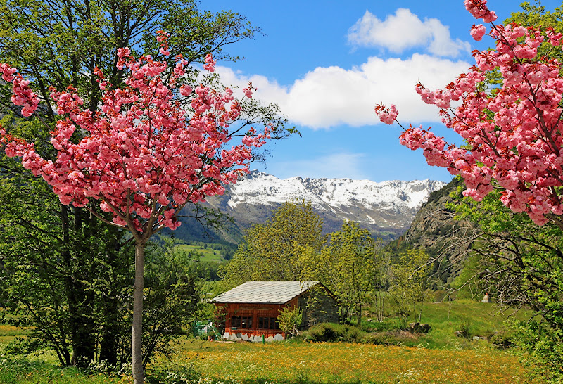 Primavera in val d'Ayas di MicheleSpadafina