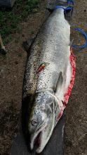 Photo: Lohi 15,8kg muonionjoki 58mm A.B. Speciaali!