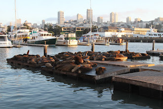 Photo: and its famous seals.