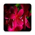 Flowers changed wallpapers icon