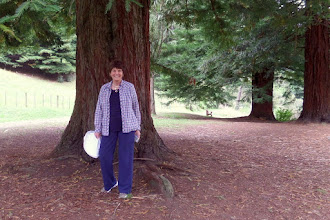 Photo: I was surprised to see a stand of California Redwoods that were planted about 100 years ago.