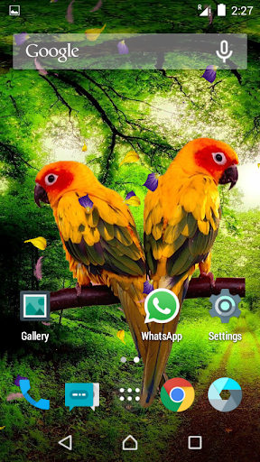 Love birds Live Wallpaper