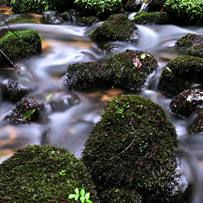 Beautiful green stones by Gil Reis - Nature Up Close Rock & Stone ( water, nature, forest, places, portugal, stones,  )
