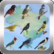 Canto de Pássaros Brasileiros APK