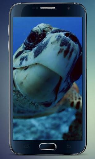 Sea Turtle Live Wallpaper