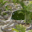 Crocodile Farm in Thailand icon