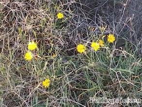 Photo: Jag hittar mera blommor här uppe i bergen