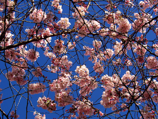 Il cielo fiorito di gaspare_aita