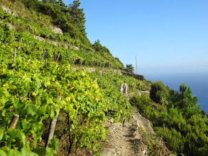 Photo: We were often walking right along the vineyards