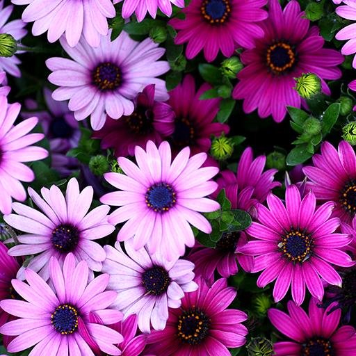 bunga hidup wallpaper - Aplikasi di Google Play