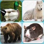Animals Names Quiz