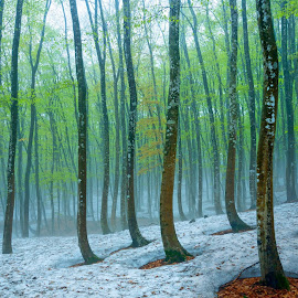 The snowy Forest by Abbas Mohammed - Landscapes Forests ( new, forest, light, sunset, hdr, tress )