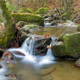 by Siniša Almaši - Nature Up Close Water ( water, up close, natural light, stream, forest, landscape, woods, depth, colours, nature, tree, autumn, cascade, trees, view, light, river )