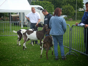 Photo: Klasse 2: 1 jarige bonte geiten.   Lukky vd Oude Schuur; Jenke'; Milka van Ingenveld.