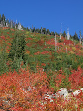 Photo: Fall colors bursting forth!