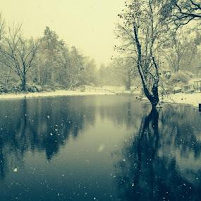 Snowy Wonderland by Miranda Powers - Landscapes Weather ( winter, wonderland, snow, pond )