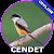 Suara Burung Cendet Juara file APK for Gaming PC/PS3/PS4 Smart TV
