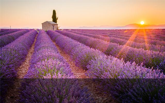 Provence  Themes & New Tab