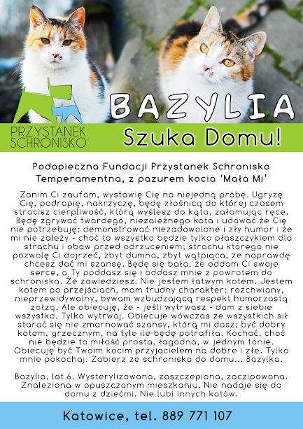 Firmoówka Bazylka