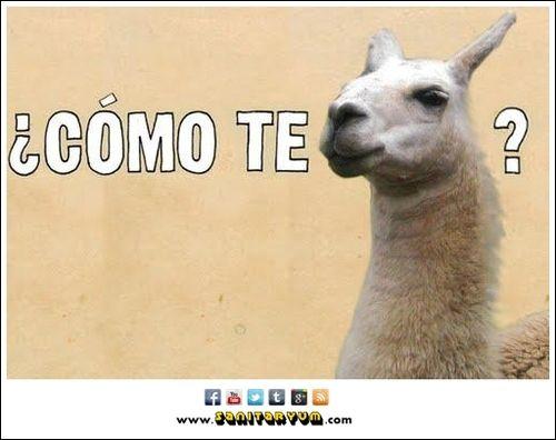spanish memes for kids
