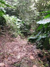 Photo: Dan maar weer naar beneden tot aan de Mount Scenery Trail