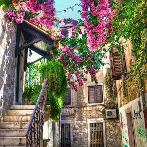 Split Flower Alley.jpg