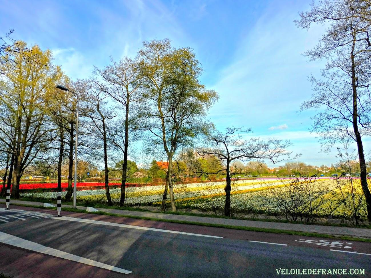 Circuit à vélo de Leiden à Keukenhof par veloiledefrance.com