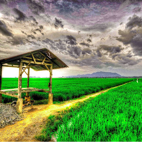 paddy field by Chairelgibrant Othman - Landscapes Prairies, Meadows & Fields