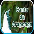 Canto da Araponga apk