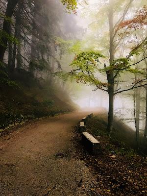 La tranquillità del bosco in autunno di GiuseppeZampieri