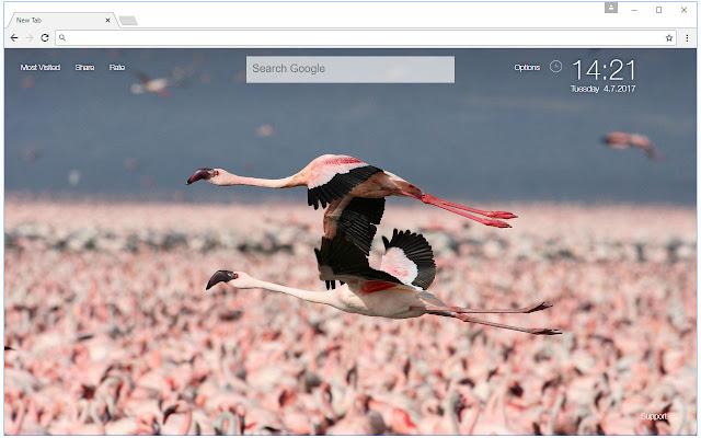 Flamingo Wallpaper Hd Flamingos New Tab
