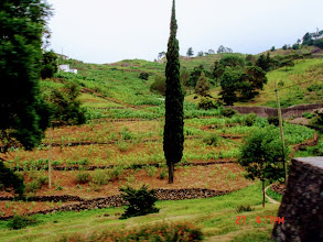 Photo: Green landscape