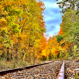 Fall on the tracks by Brock Willis - Transportation Railway Tracks ( fall, nature, tree, train tracks, autumn, trees, tracks, train, indiana )