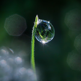 by Kawan Santoso - Nature Up Close Natural Waterdrops ( kaliketek 2 )