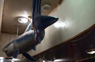 Photo: То ли акула, то ли белуха