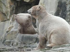 Photo: Knut bekommt schon noch heraus, was da drin ist ;-)