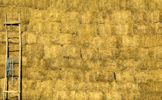 Giallo Oro. di sole62