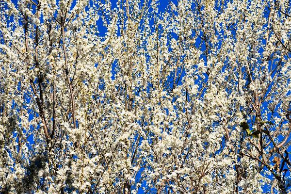 Bianco Marzo di laura62