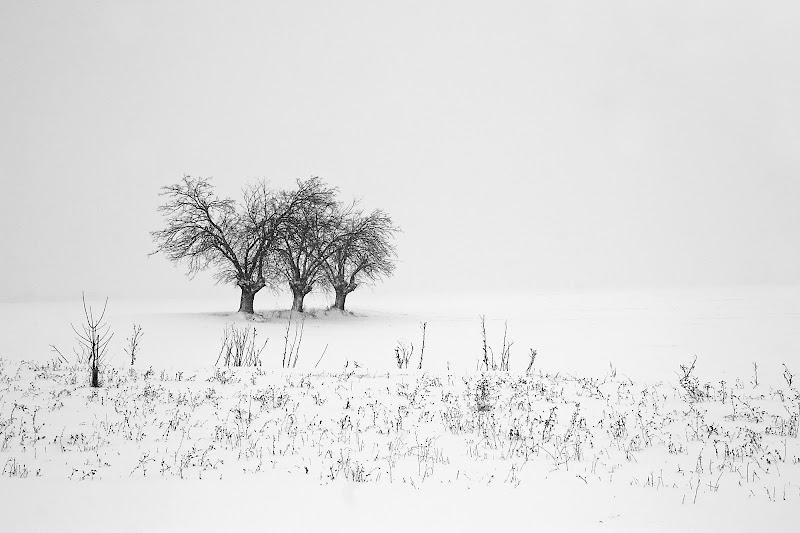 tre alberi nel freddo di Fotodiale