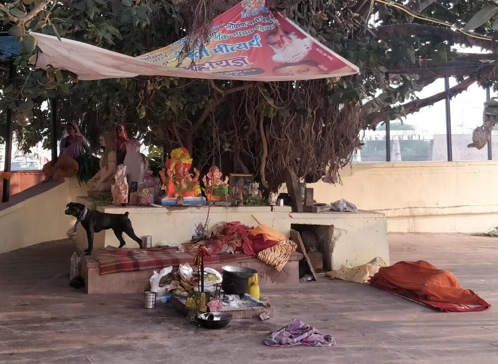 tree+temple+hindu+idols+pushkar+ghat+rajasthan