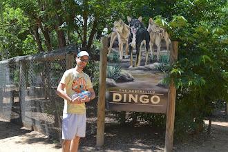 Photo: Dingo ate my baby