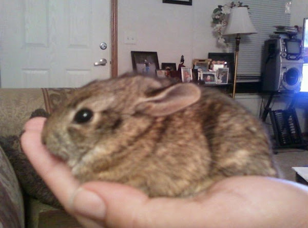 Brier Rabbit Recipe