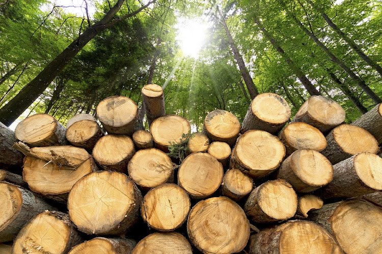 Timber Plantation. Picture: ISTOCK