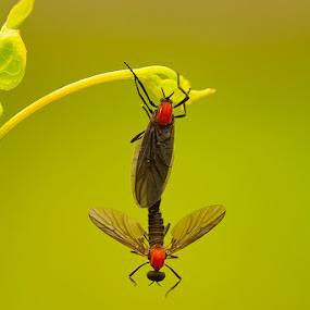 Really..really love you by Faiq Alfaizi - Animals Insects & Spiders