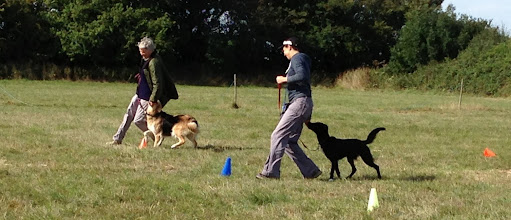Photo: DogBasics Fun Day 2013 - Loopyloop game with Gretl Golden X / Anne and Daffy Border Collie / Miriam