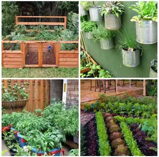 vegetable garden ideas screenshot thumbnail